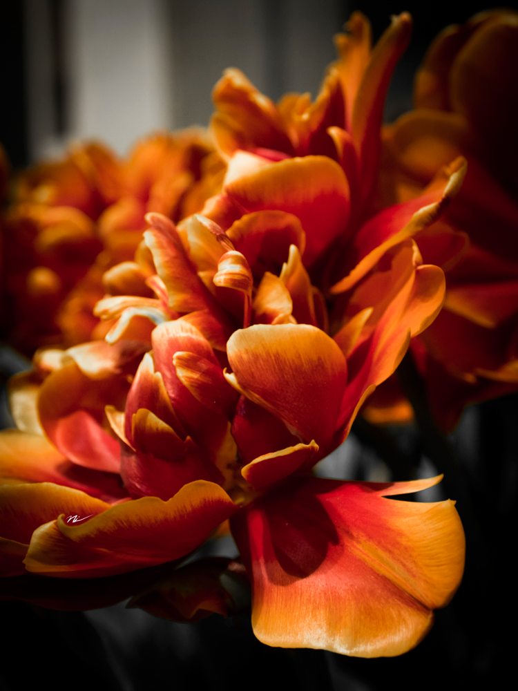 Chicago-Flower-Show-2015-13.png