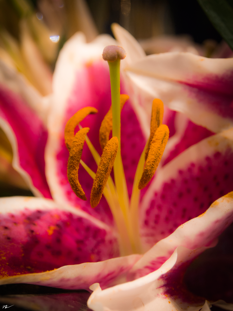 Chicago-Flower-Show-2015-16.png