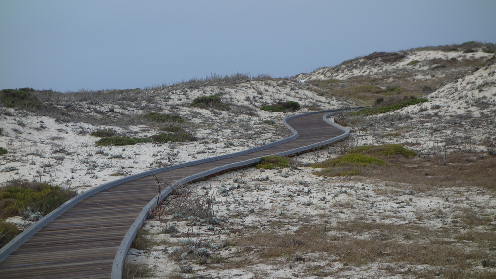 The boardwalk path at Asilomar State Park, leading to the Pacific Ocean.