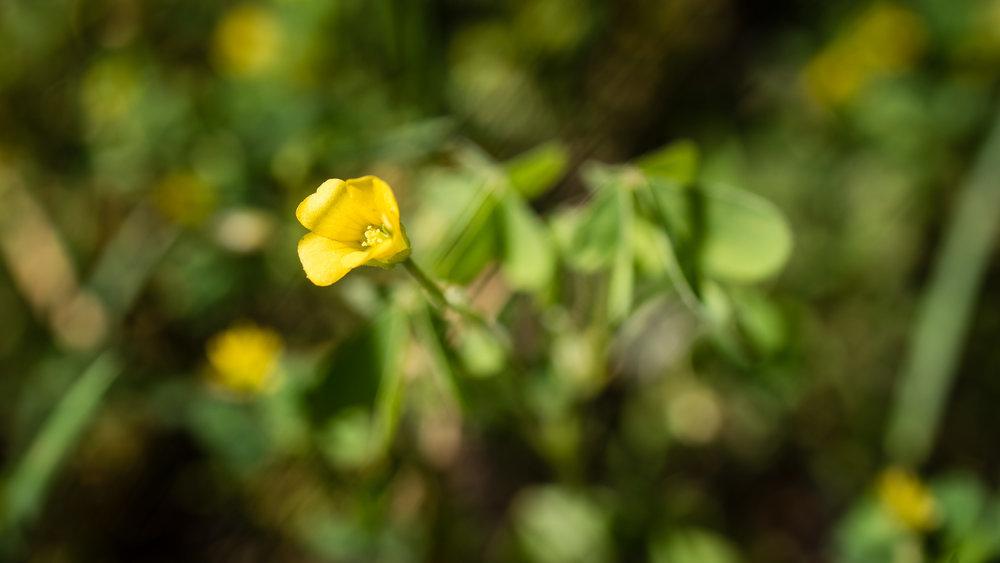 Nature_Diary-4.jpg