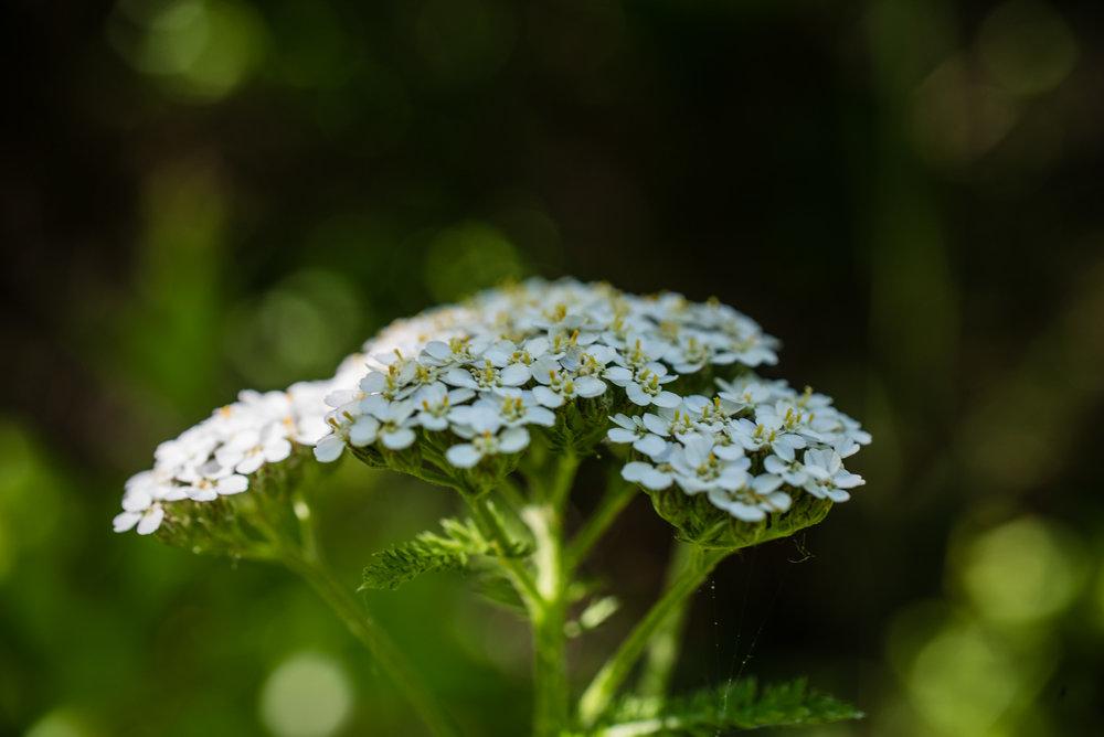 Nature_Diary-6.jpg