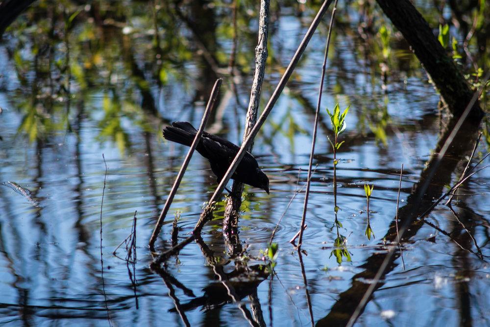 Nature_Diary-8.jpg