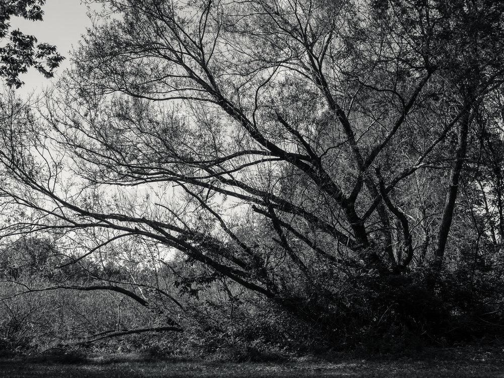 Nature_Diary_dos-7.jpg
