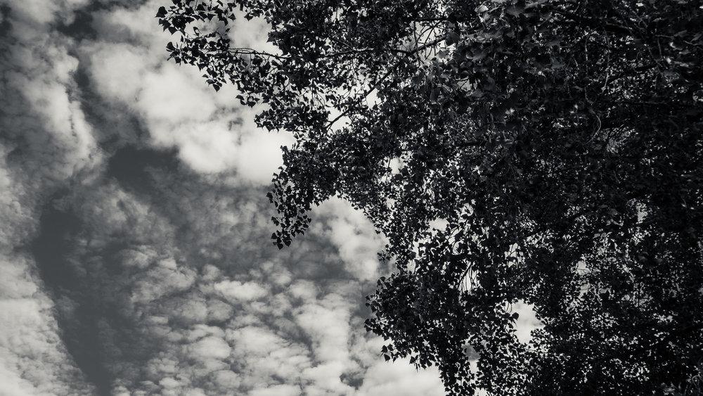Nature_Diary_dos-10.jpg