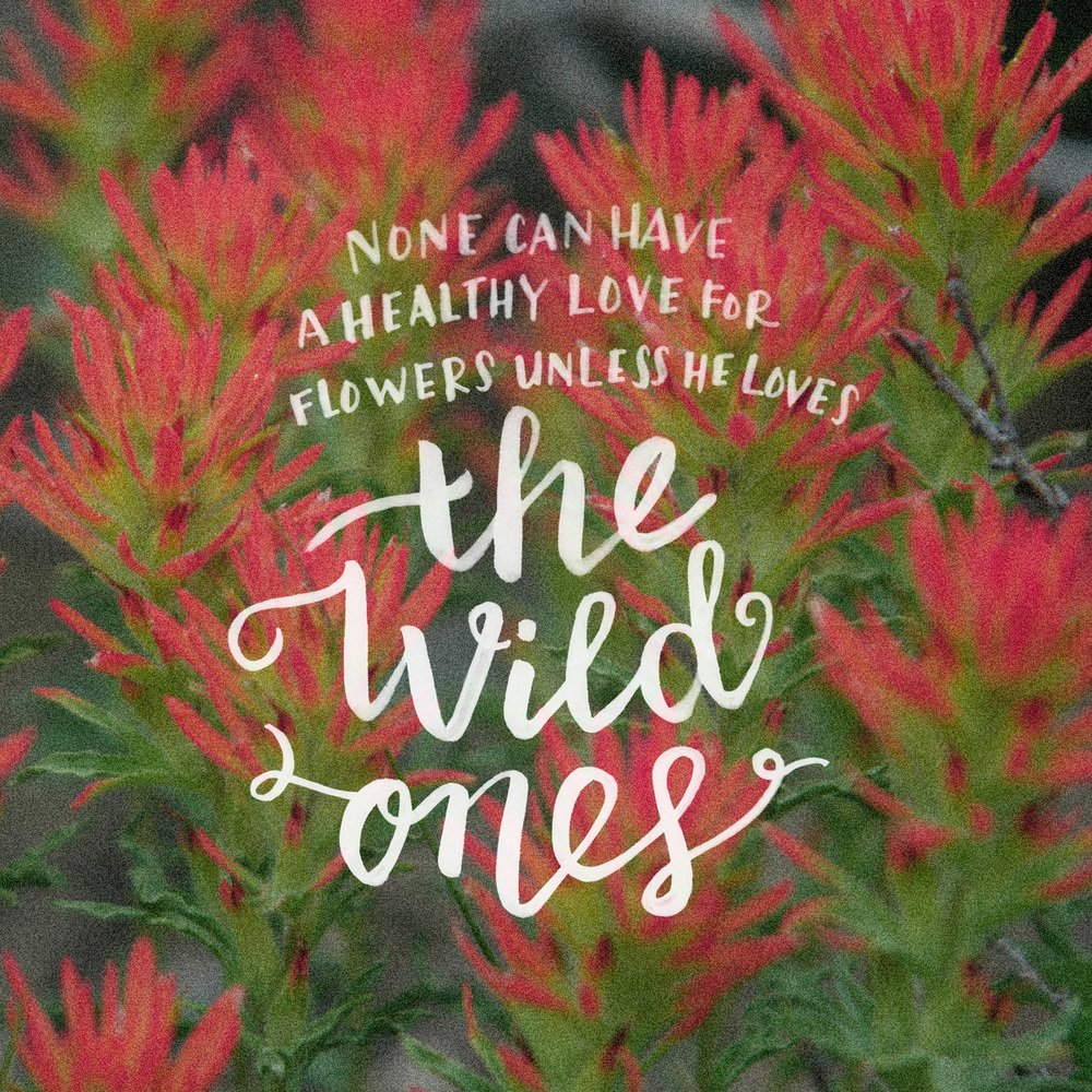 Another one in the Tahoe Wildflower Series :) Original photo by my father-in-law, edited by me in Photoshop (added some noise for texture and did some color editing). I forgot to write whom the quote is by :( It's by Forbes Watson!