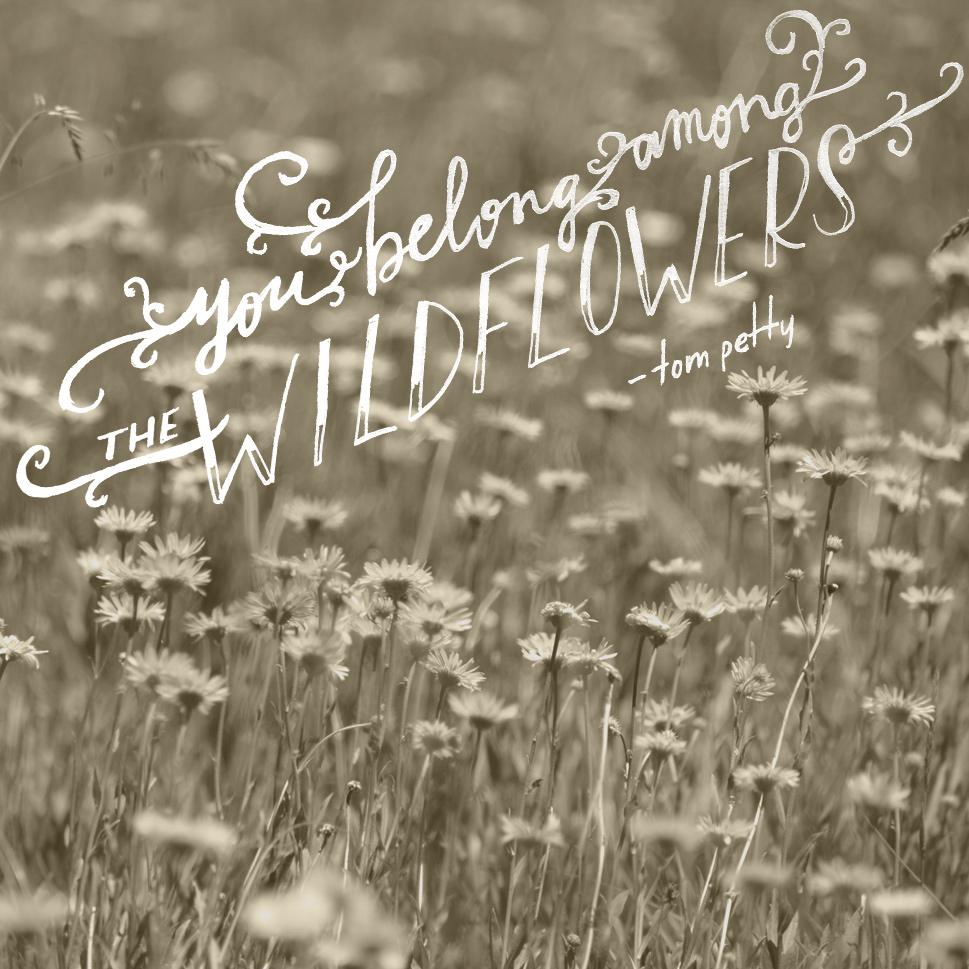 day 126 wildflowers tom petty.JPG