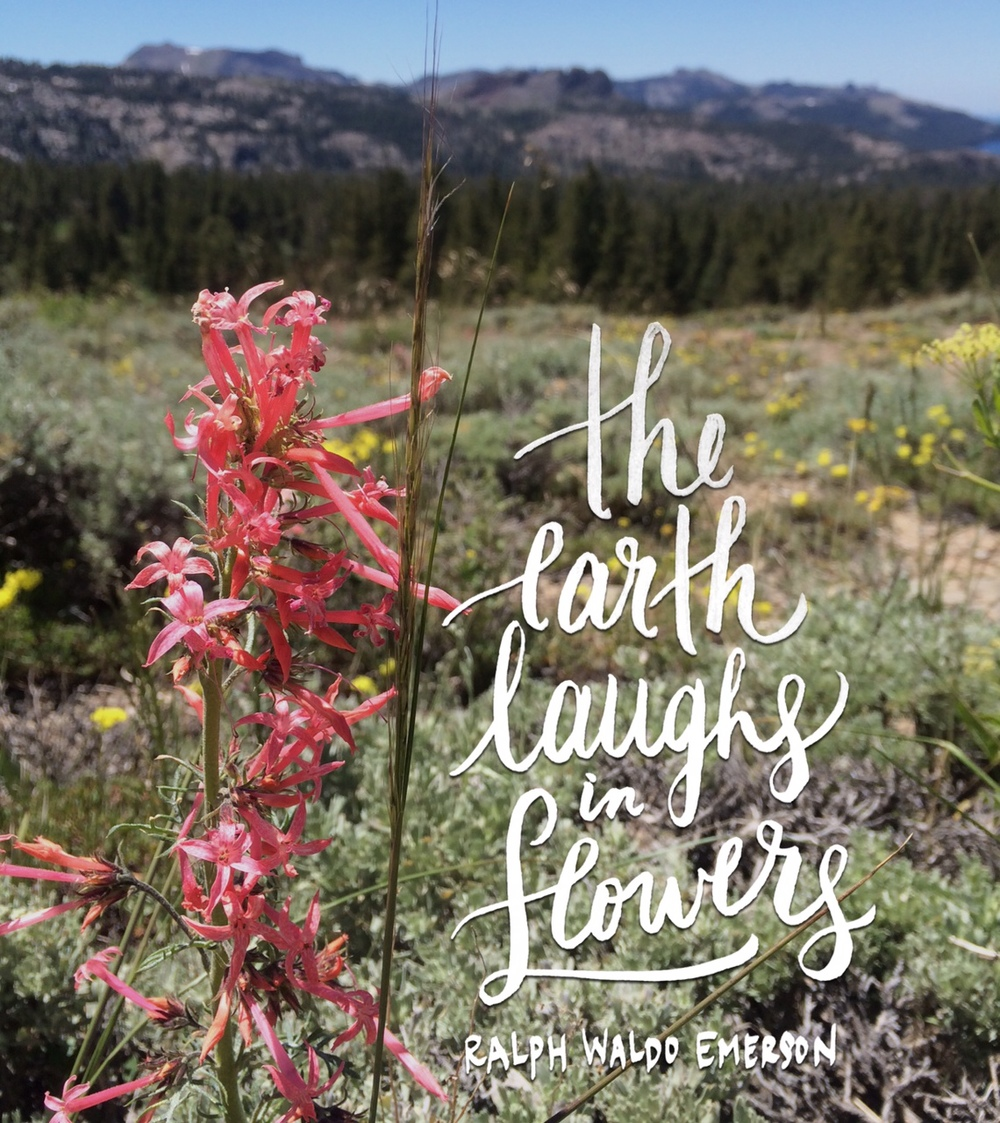 day 125 earth laughs in flowers.JPG