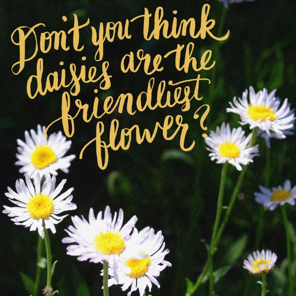 day-145-friendliest-flower.jpg