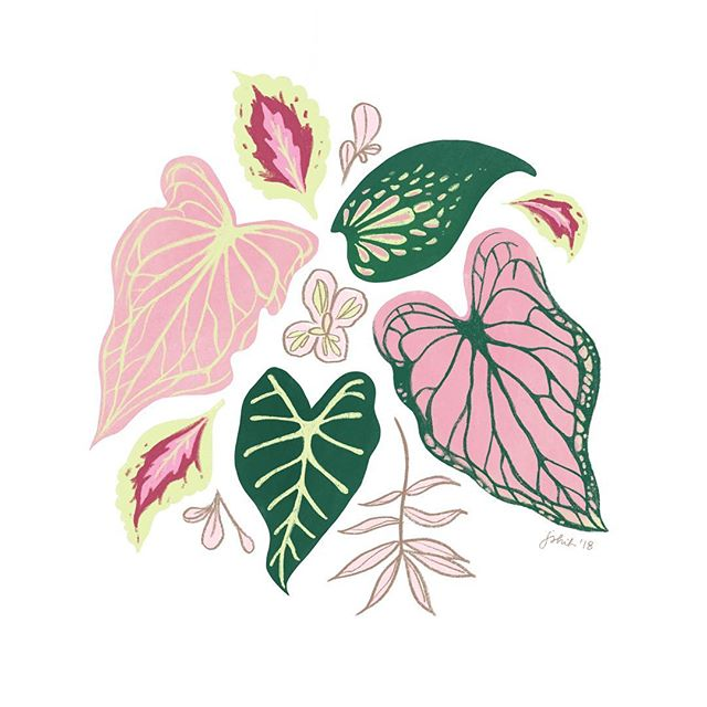 loved seeing so many beautiful plants while we were in Taiwan... here's a little study of some leaves that caught my eye 🌿 #joanneshihillustration