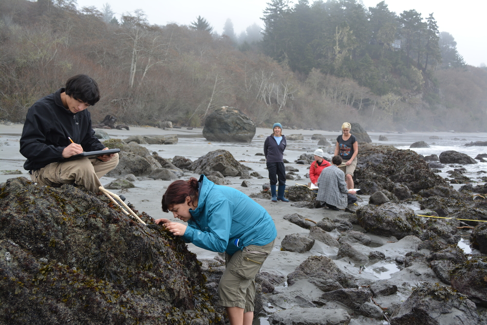 Humboldt State University students conducting surveys at Trinidad, CA, 2014
