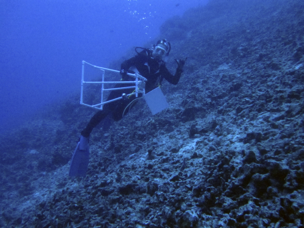 Mesophotic reef research off Kona, Hawaii at 120 ft, 2013