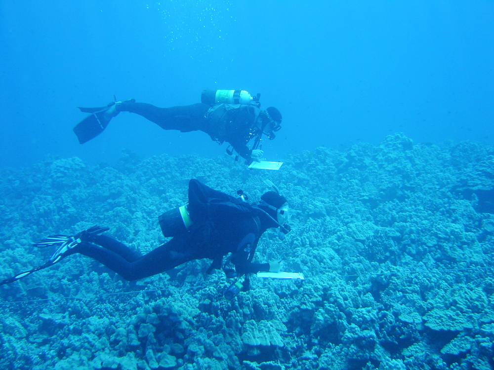 Students divers collecting data during QUEST, 2002