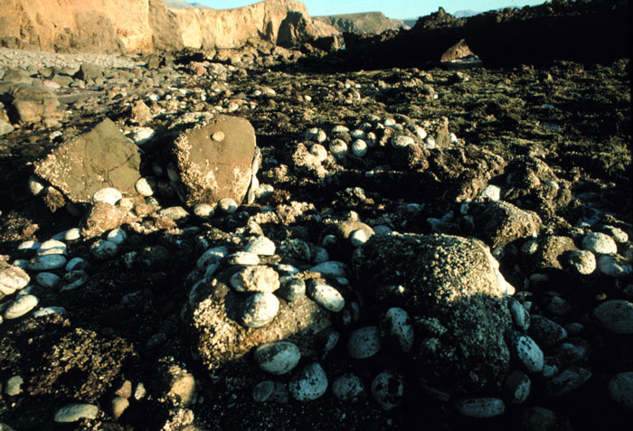 Santa Cruz Island, 1986