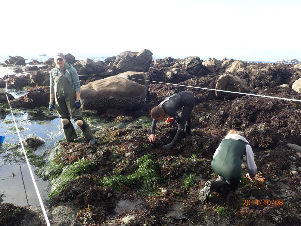 Intertidal surveys at Palmer's Point, 2014
