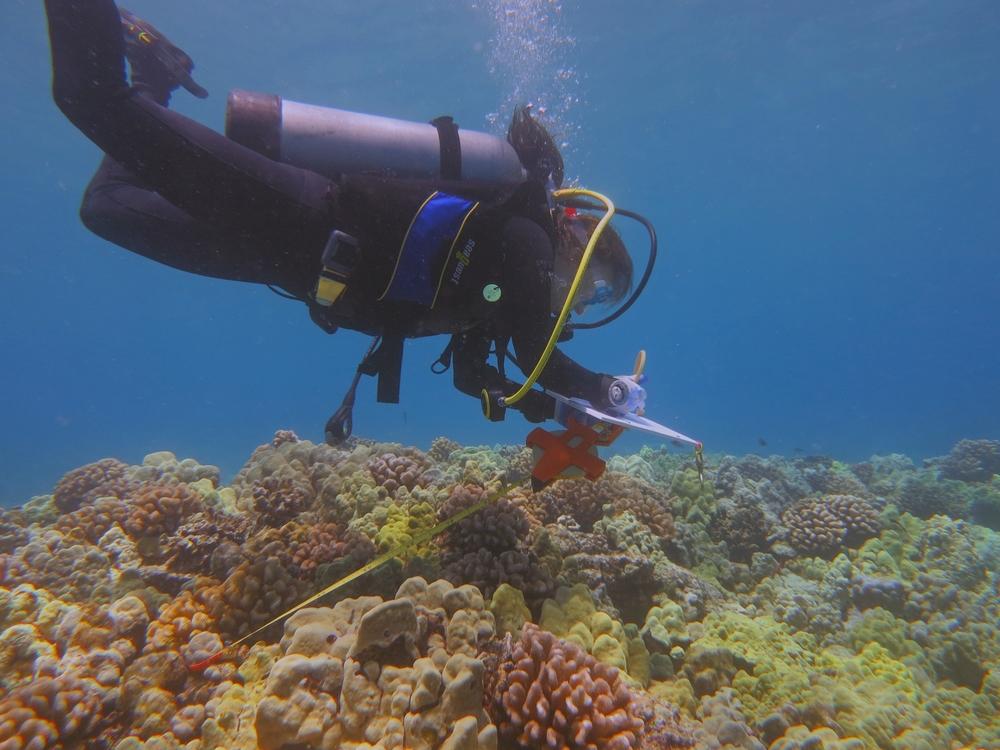 Molly Bogeberg at Puako, Hawaii, 2013