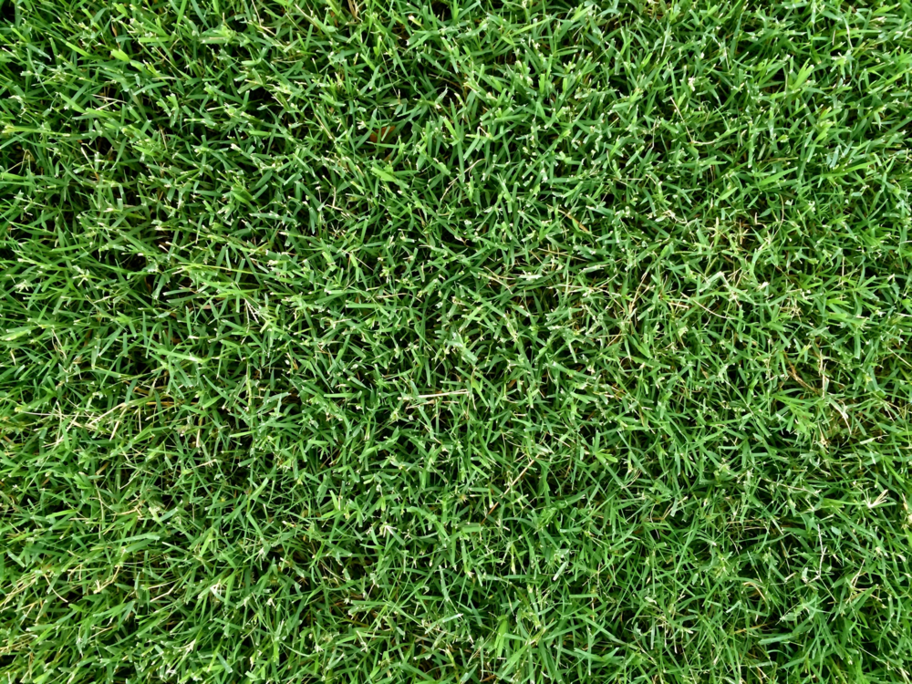 Look Down Grass Texture