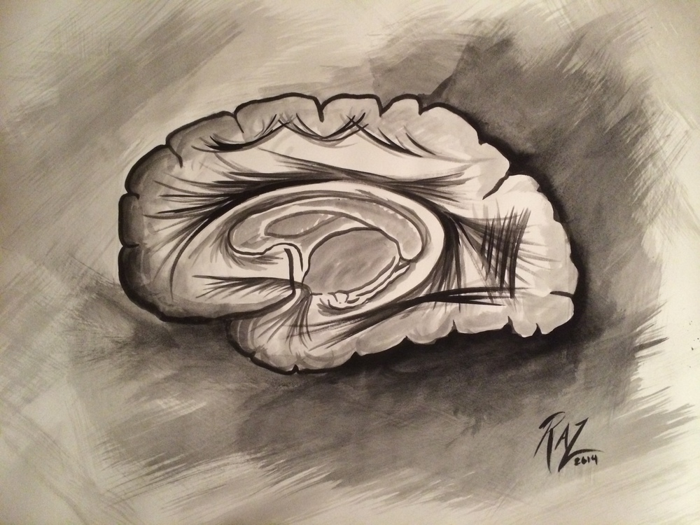 Sagittal Brain Slice
