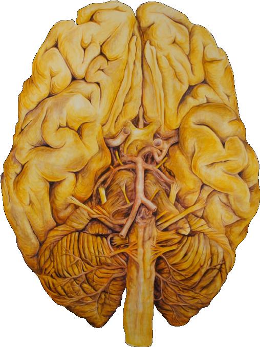 Inferior Brain T3