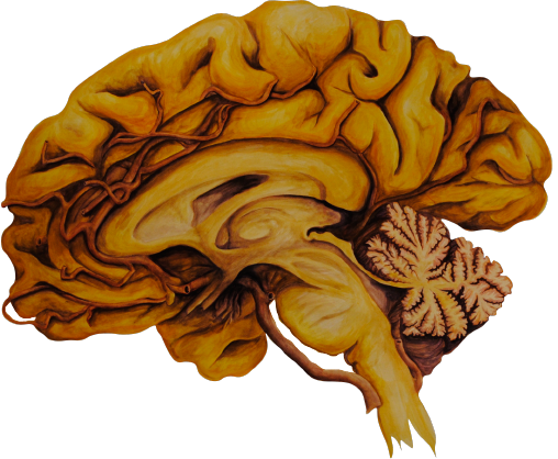 Thinker's Trinity Sagittal RIght