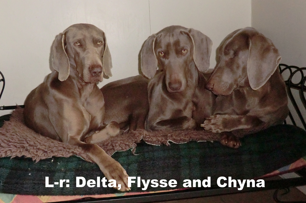 L-r: Delta, Flysse and Chyna
