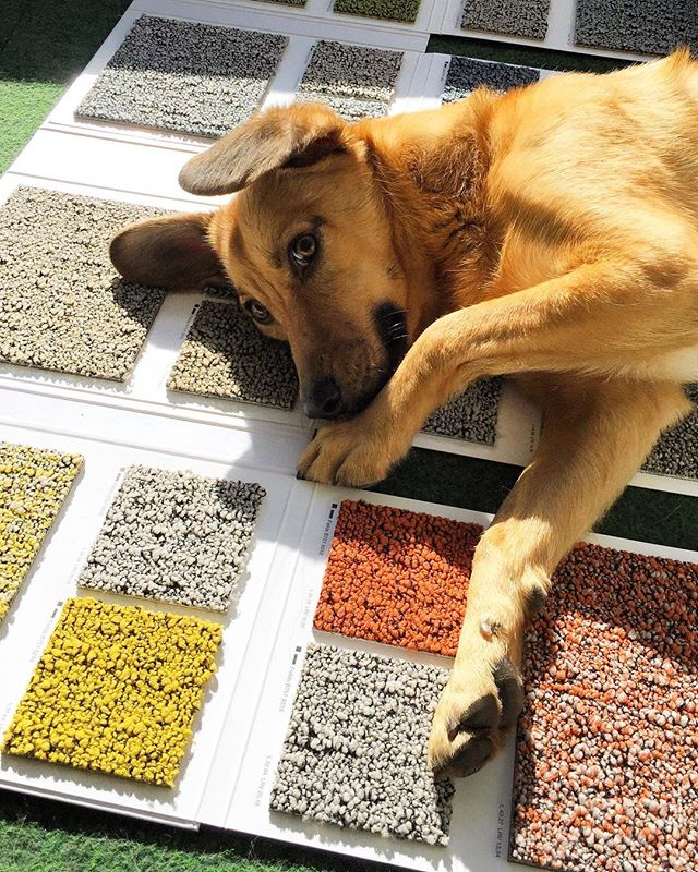 The choice of a flooring expert 👌🏻 Desso Fuse! #desso #studiolillehammer @dallas_the_dog_official
