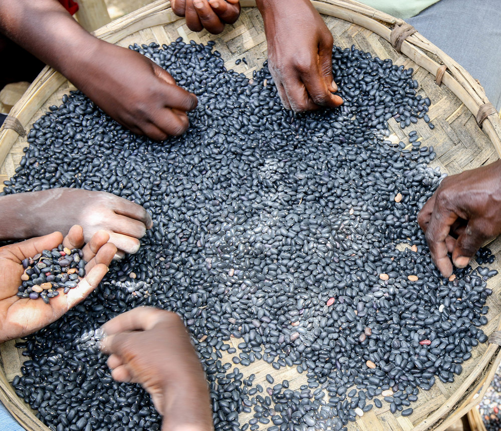Members of a PDL cooperative sorting black beans in Bwa Nef, Haiti.