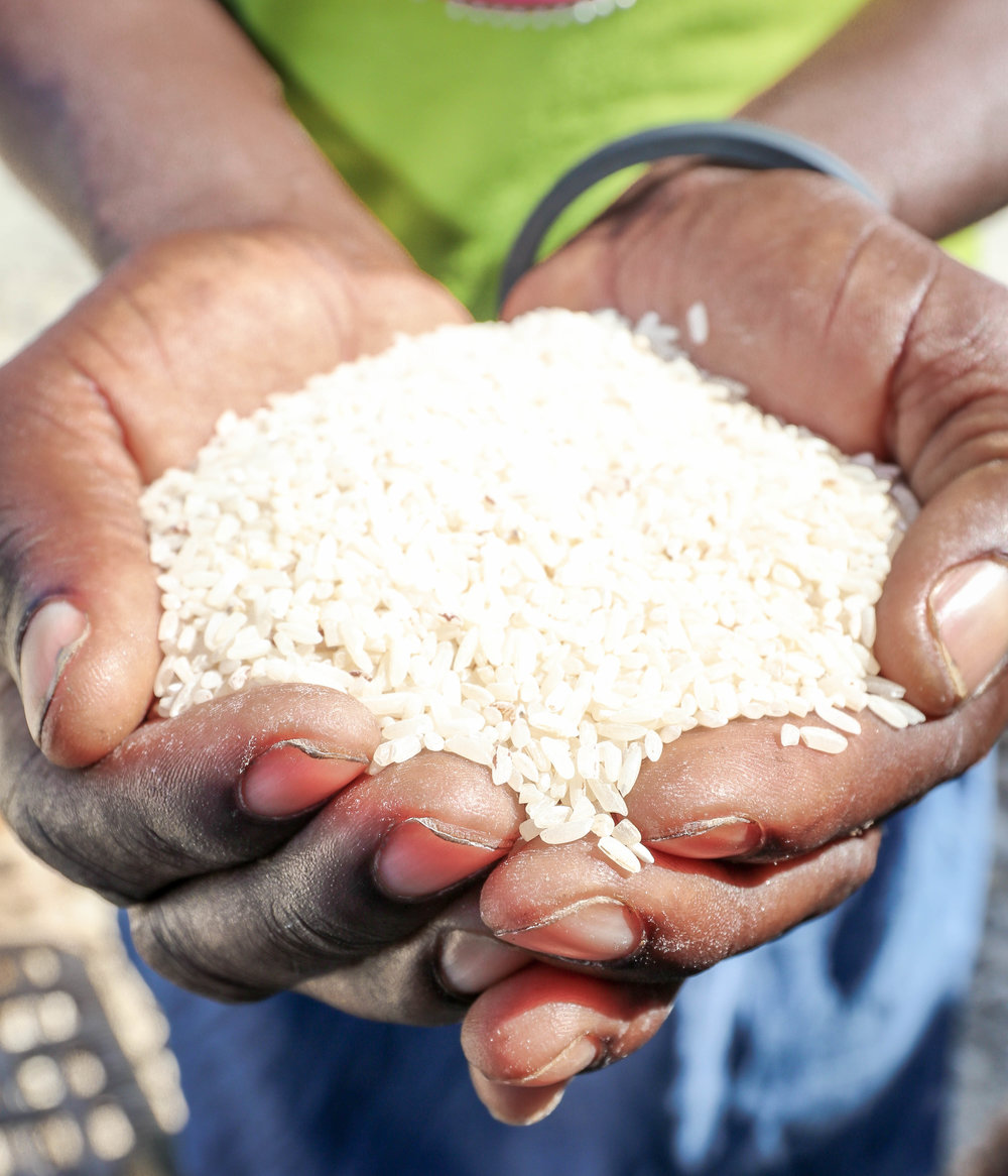 PDL cooperative rice in Sanyago, Haiti.