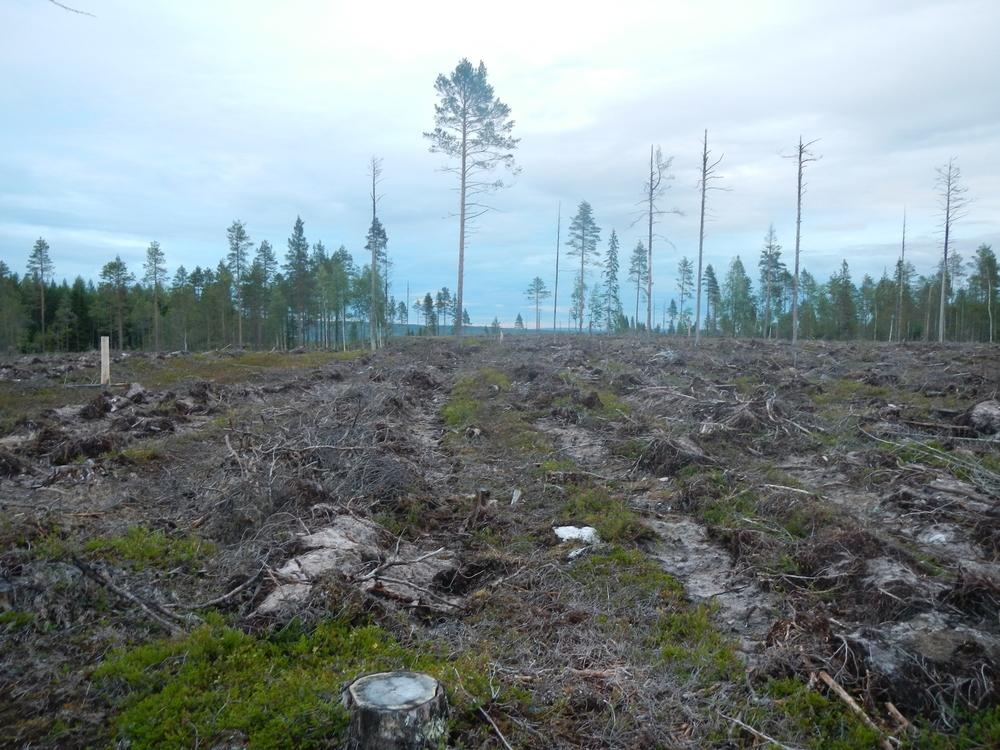 Kalhyggen och markberedning, otrevlig syn.