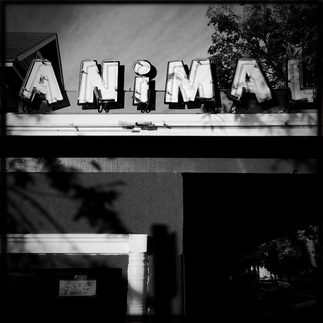 Animal House Saloon