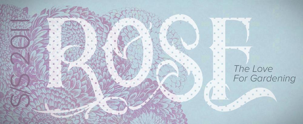 ROSE-02.jpg