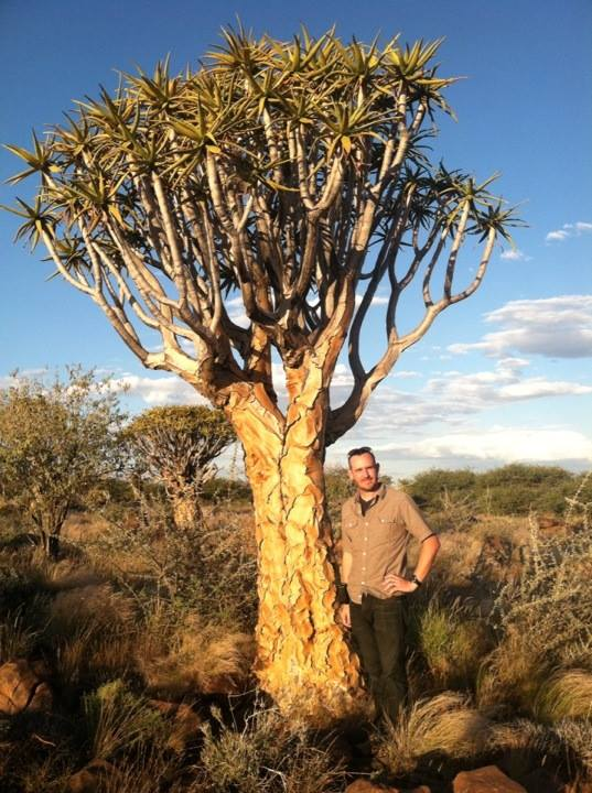 Robert and a Quiver Tree