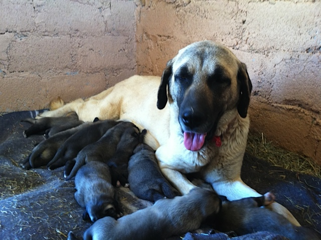 Aleyah Puppies