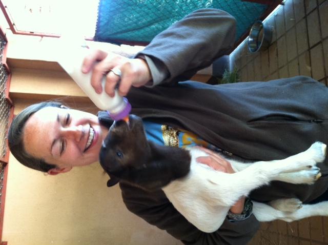 Stephanie feeding baby goat