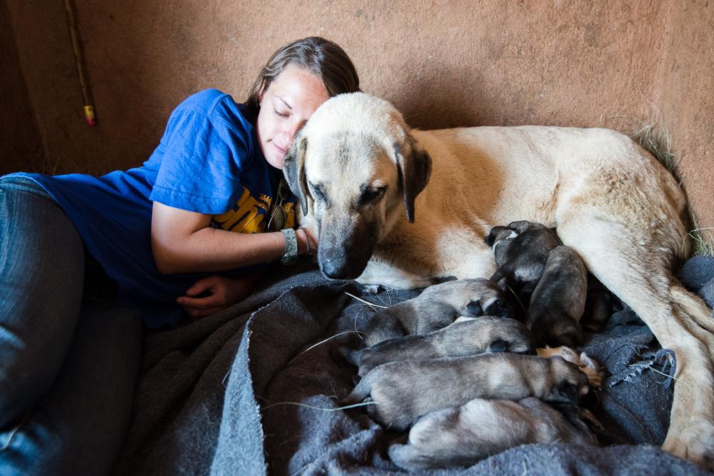 Karabib's Puppies