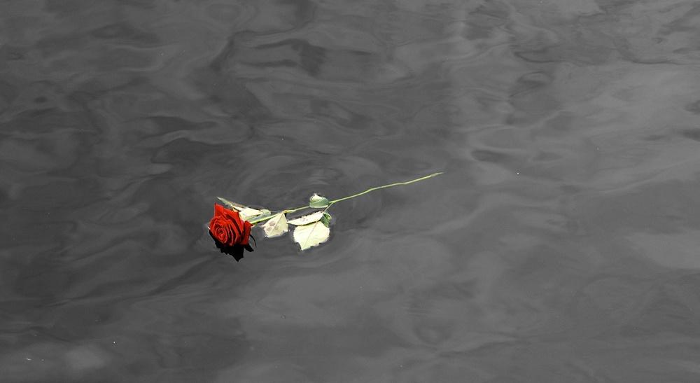 Rose i BV sh.jpg