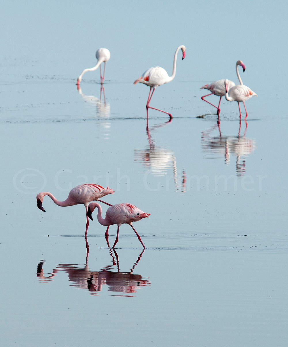Flamingos - Lake Masek, Tanzania