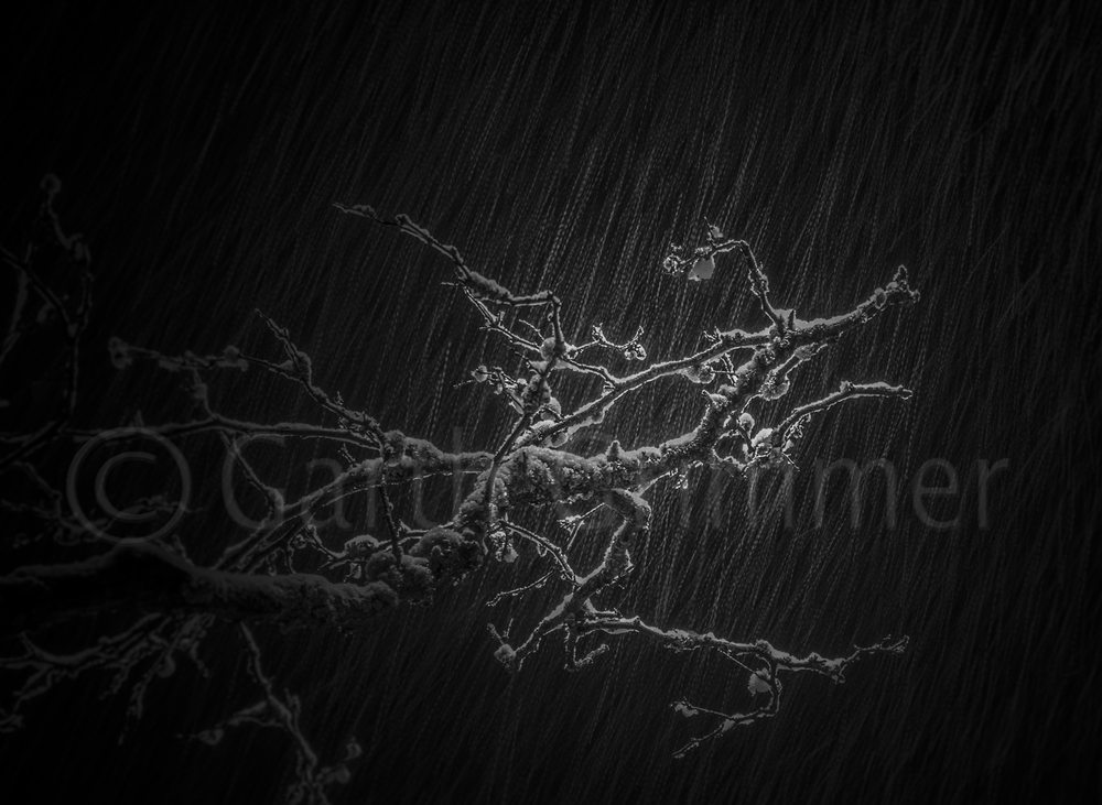 Branch in snow shower