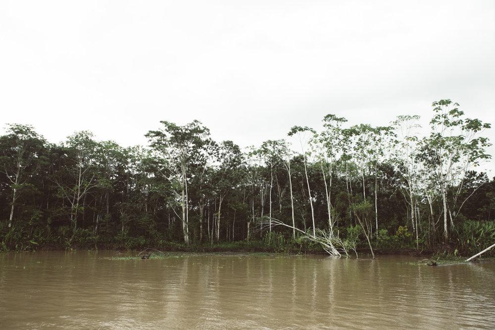 Amazonas_poem-4.jpg