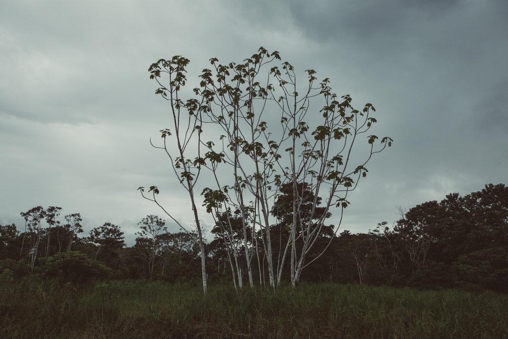 Amazonas_poem-7.jpg