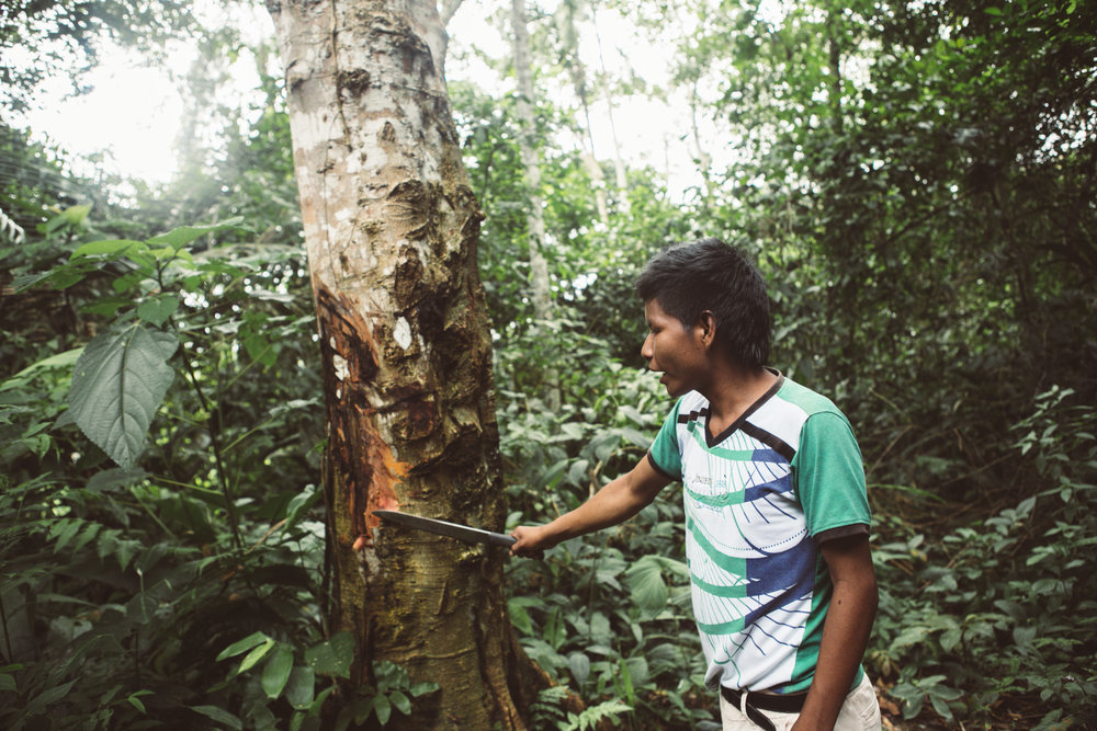 Amazonas_poem-22.jpg