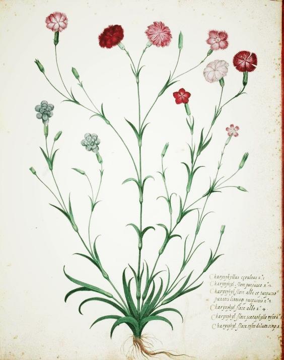 vintage printable carnation.jpg