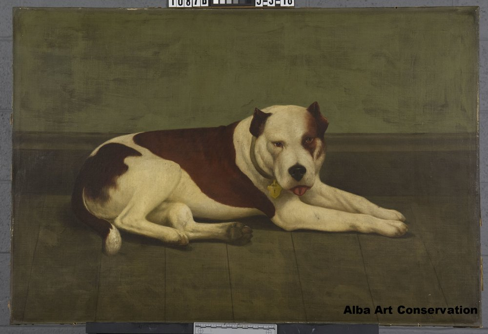 Portrait of Dog Jack, Before Conservation Treatment