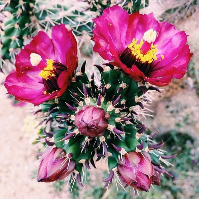 Cactus blooms scattered throughout the land