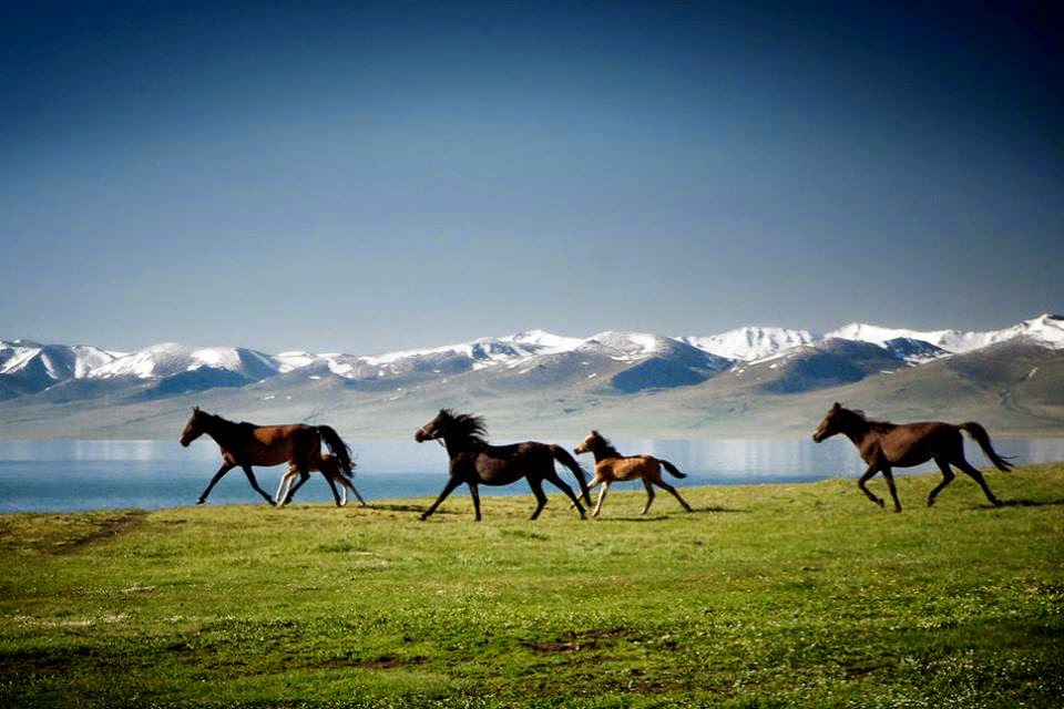 """Domestication of the horse most likely took place in Central Asia prior to 3500 BC."" - via Wikipedia from multiple sources  Photo by  Markus Huth"