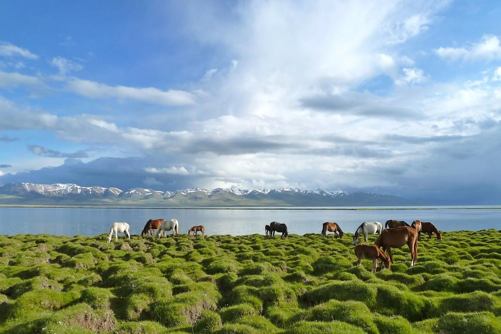 Horses at Son-Kul lake, the Land of Nomads