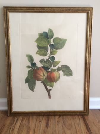 Framed Botanical Print     $45     View on Craigslist