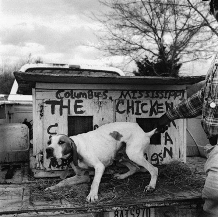 The chickenman's dog , Lowndes County, Mississippi, 1990 Silver Gelatin Print Image 10 x 10 inches/Sheet 11 x 14 inches