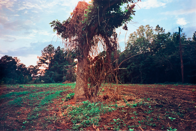 Untitled  (Tree in field), 1976 Dye Transfer Print 20 x 24 inches