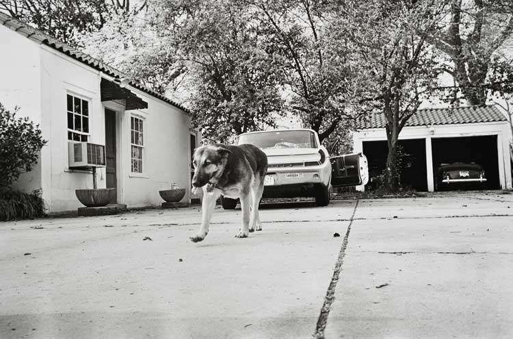 Untitled  (Dog on sidewalk), 1960-1972 Gelatin Silver Print 16 x 20 inches