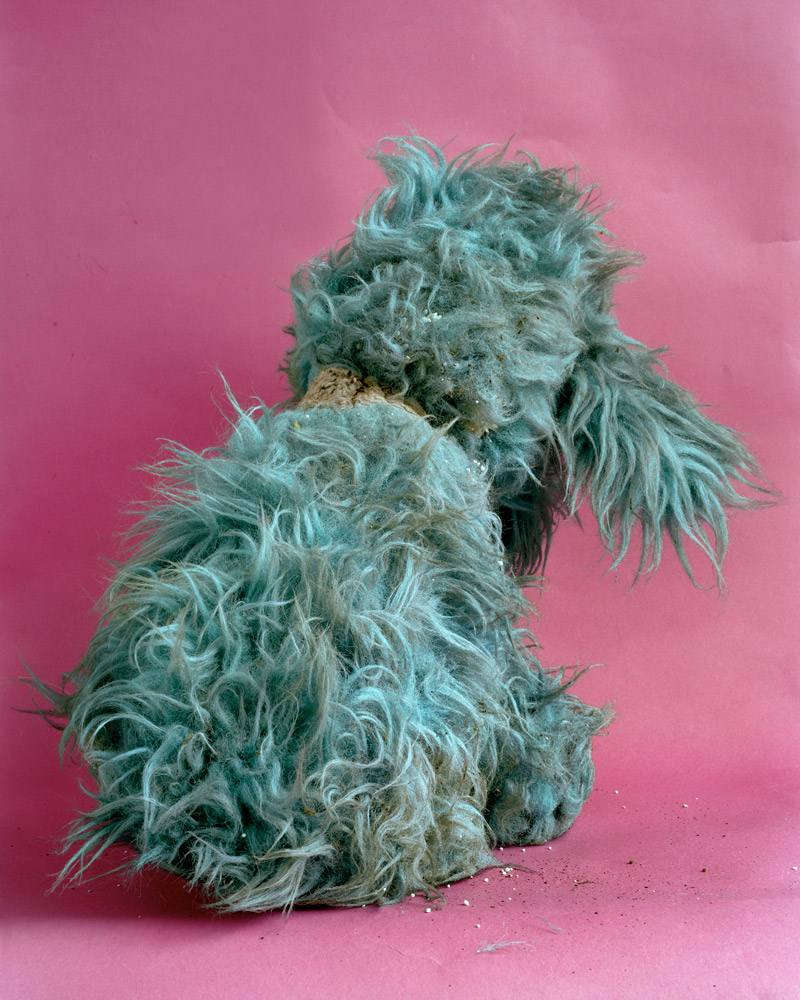 Stuffed Toy Poodle,  2010